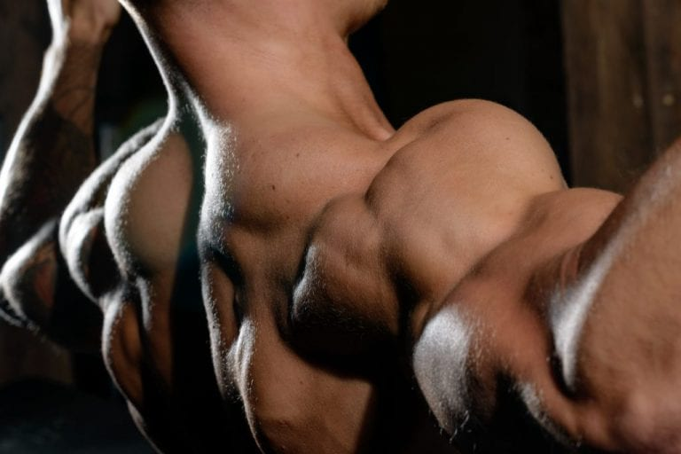 Muscular back of a male fitness model